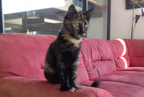 Disappearance alert Cat Female , 2 years Montmollin Switzerland