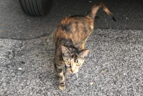 Discovery alert Cat Female , 1 year Sion Switzerland