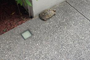 Discovery alert Tortoise Unknown Fully Switzerland