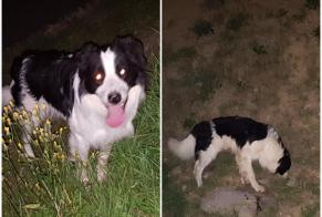 Discovery alert Dog  Male , 6 years Monthey Switzerland