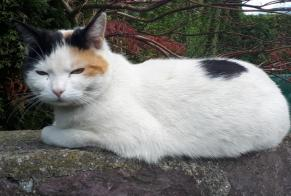 Disappearance alert Cat miscegenation Female , 3 years Collonges Switzerland