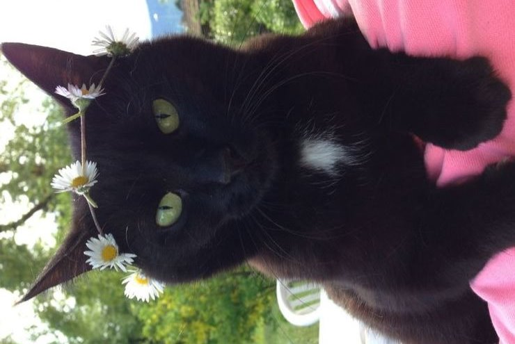 Disappearance alert Cat Female , 9 years Vully-les-Lacs Switzerland