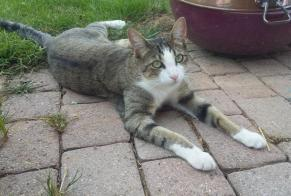 Disappearance alert Cat miscegenation Female , 3 years Ursy Switzerland