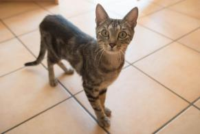 Discovery alert Cat miscegenation Male Boudry Switzerland