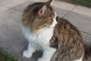 Disappearance alert Cat  Male , 3 years Echichens Switzerland