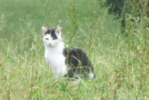 Disappearance alert Cat Female , 4 years Châtel-Saint-Denis Switzerland