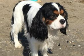 Disappearance alert Dog  Male , 1 years Servion Switzerland