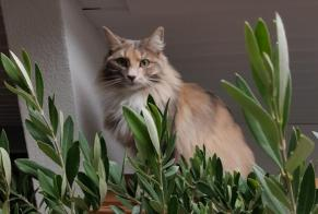 Disappearance alert Cat Female , 2 years Châtel-Saint-Denis Switzerland