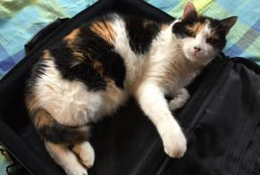 Disappearance alert Cat miscegenation Female , 9 years Bagnes Switzerland