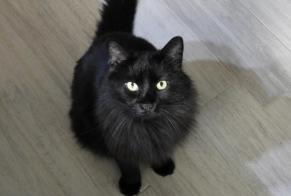 Disappearance alert Cat miscegenation Male , 7 years Sion Switzerland