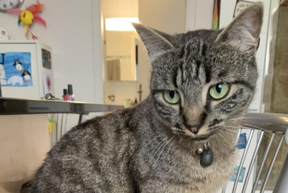 Disappearance alert Cat Female , 3 years Montilliez Switzerland
