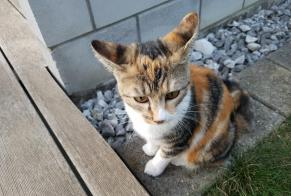 Discovery alert Cat Female Riaz Switzerland