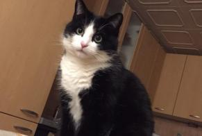 Disappearance alert Cat Male , 5 years Liddes Switzerland