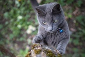 Disappearance alert Cat Female , 1 years La Chaux-de-Fonds Switzerland