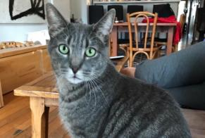 Disappearance alert Cat  Male , 3 years Milvignes Switzerland