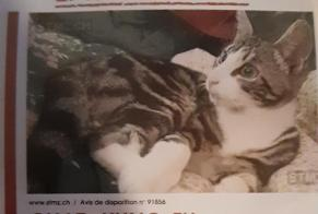 Disappearance alert Cat Male , 4 years Meyrin Switzerland