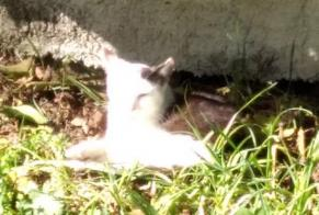 Discovery alert Cat Unknown Forel (Lavaux) Switzerland