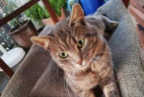 Discovery alert Cat Male Payerne Switzerland