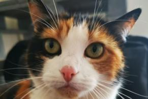 Disappearance alert Cat Female , 7 years Lausanne Switzerland
