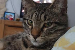 Disappearance alert Cat Male , 1 years Le Chenit Switzerland