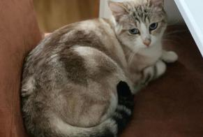 Disappearance alert Cat miscegenation Female , 7 years Plan-les-Ouates Switzerland