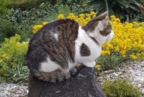 Disappearance alert Cat  Female , 4 years Vétroz Switzerland