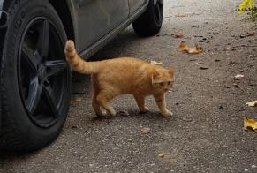 Discovery alert Cat Male Saint-Imier Switzerland