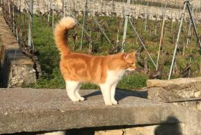 Disappearance alert Cat Male , 2 years Puidoux Switzerland
