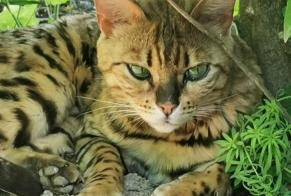 Disappearance alert Cat  Male , 4 years Martigny-Combe Switzerland