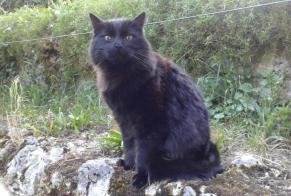 Disappearance alert Cat miscegenation Male , 8 years Les Bayards Switzerland