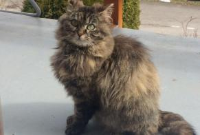 Discovery alert Cat Female Gibloux Switzerland