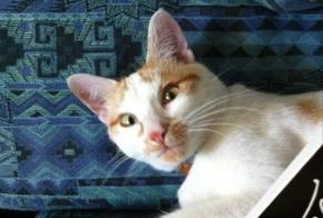 Disappearance alert Cat Male , 9 years Neyruz (FR) Switzerland