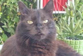 Disappearance alert Cat Female , 1 years Boudry Switzerland