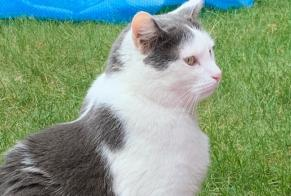 Discovery alert Cat Male Conthey Switzerland