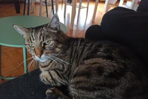 Disappearance alert Cat miscegenation Female , 15 years Monthey Switzerland