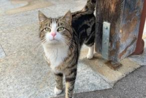 Discovery alert Cat Male Montreux Switzerland